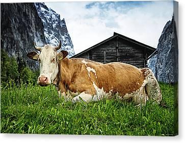 Swiss Miss Canvas Print by Ryan Wyckoff
