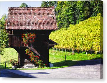 Swiss Shed In A Vineyard Canvas Print by George Oze