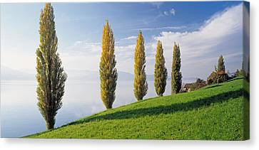 Switzerland, Lake Zug, Row Of Populus Canvas Print by Panoramic Images