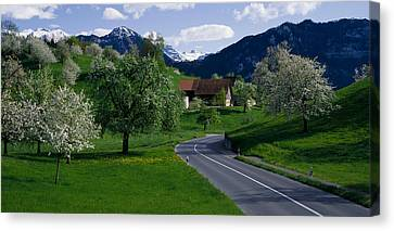 Switzerland, Luzern, Trees, Road Canvas Print by Panoramic Images