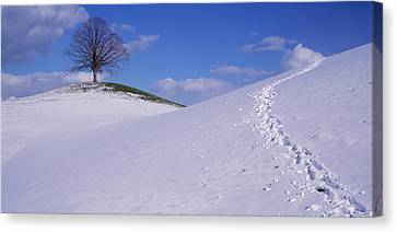 Switzerland, View Of A Lone Linden Tree Canvas Print by Panoramic Images
