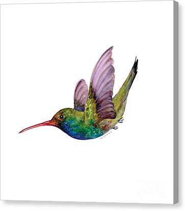 Hummingbird Canvas Print - Swooping Broad Billed Hummingbird by Amy Kirkpatrick