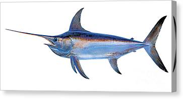 Swordfish Canvas Print by Carey Chen