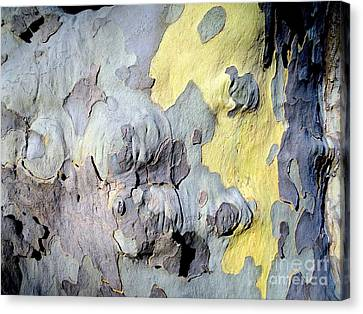 Sycamore Camouflage Canvas Print