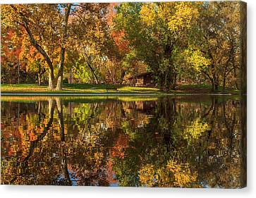 Sycamore Reflections Canvas Print by James Eddy