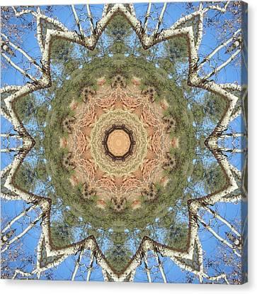 Sycamore Splendor Canvas Print by Trina Stephenson