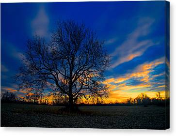 Sycamore Sunset Canvas Print by William Jobes