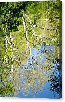Canvas Print featuring the photograph Sycamore Trees Reflected In A Stream by A Gurmankin