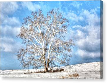 Canvas Print featuring the photograph Sycamore Winter by Jaki Miller