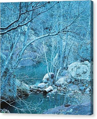 Sycamores And River Canvas Print by Kerri Mortenson