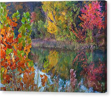 Willow Lake Canvas Print - Sycamores And Willows, Inks Lake by Tim Fitzharris