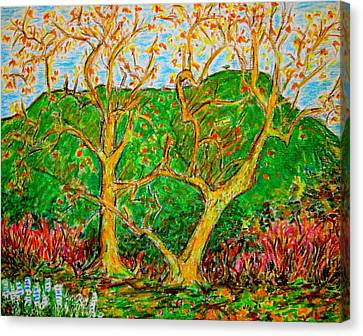 Sycamores Cahuenga Peak Canvas Print