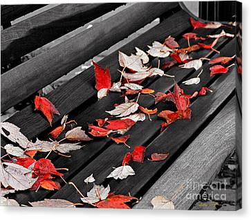 Sylva Bench 2003 Canvas Print