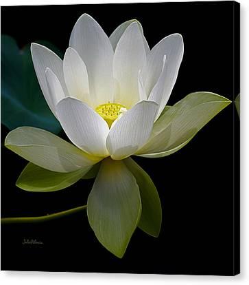 Symbolic White Lotus Canvas Print