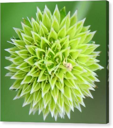 Symmetry In Green Canvas Print by Julie Cameron