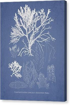 Alga Canvas Print - Symphocladia Gracilis  by Aged Pixel