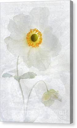 Symphony Canvas Print by John Edwards