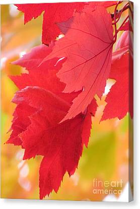 Canvas Print featuring the photograph Symphony Of Autumn 22 by France Laliberte