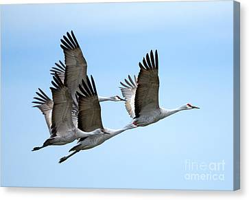 Synchronized Canvas Print by Mike Dawson