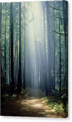 China Beach Canvas Print - T. Bonderud Path Through Trees In Mist by First Light