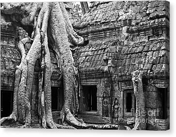 Ta Prohm Roots And Stone 01 Canvas Print by Rick Piper Photography