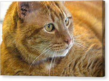 Tabby Cat Portrait Canvas Print by Sandi OReilly