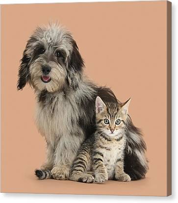 Tabby Kitten And Pup Canvas Print