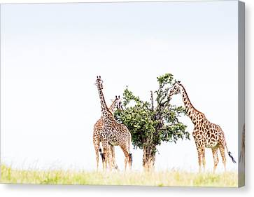 Table For Three - Color Canvas Print by Mike Gaudaur