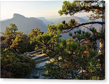North Carolina Canvas Print - Table Mountain Pines At Linvile Gorge by Keith Clontz