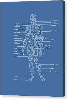 Table Of Arteries Canvas Print