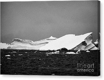 tabular fresh snow icebergs near cuverville island Antarctica Canvas Print