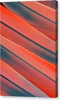 Tail Feather Pattern Scarlet Macaw Canvas Print