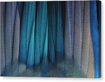 Tail Of Rainbow Parrotfish Canvas Print by Jeff Rotman