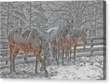 Canvas Print featuring the photograph Tails To The Wind by Gary Hall