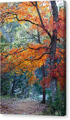 Take A Bough Canvas Print by Debbie Karnes