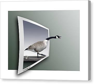 Take A Gander Canvas Print by Brian Wallace