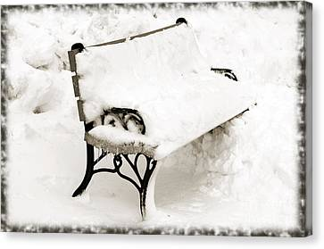 Take A Seat  And Chill Out - Park Bench - Winter - Snow Storm Bw Canvas Print by Andee Design