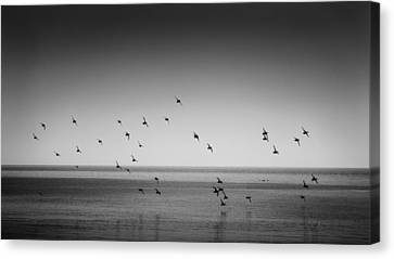 Take Flight 2 Canvas Print by Peter Scott