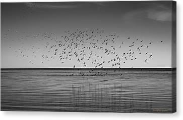 Take Flight 3 Canvas Print by Peter Scott