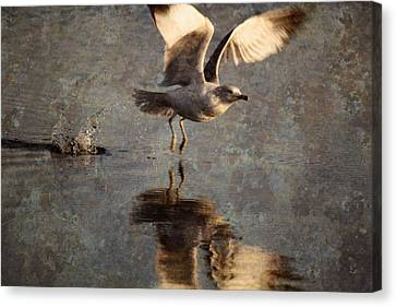 Take Flight Canvas Print by Andrew Pacheco