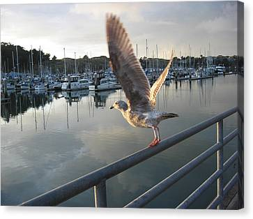 Take Flight Canvas Print by Dianne Levy