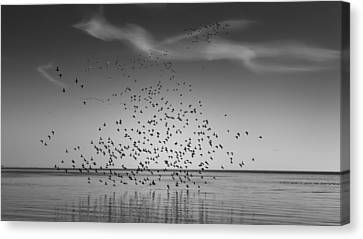 Take Flight Canvas Print by Peter Scott