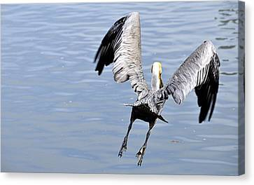 Canvas Print featuring the photograph Take Off by AJ  Schibig