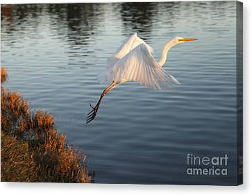 Take Off Canvas Print by Craig Dingle