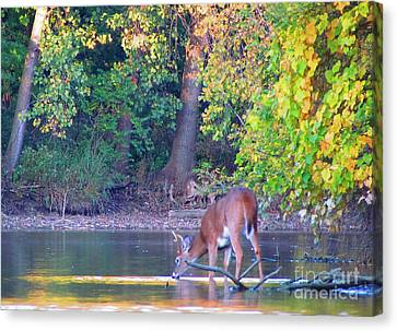 Taking A Drink Canvas Print