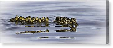 Taking A Swim Canvas Print by Thomas Young