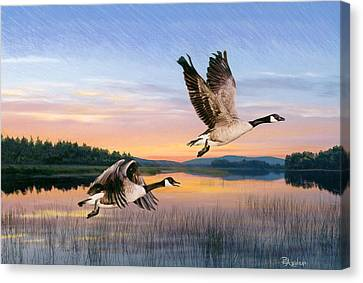 Maine Landscape Canvas Print - Taking Flight by Brent Ander