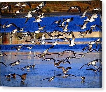 Taking Flight Canvas Print by Tom DiFrancesca