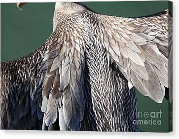Taking Flight With A Brown Pelican 5d21703 Canvas Print