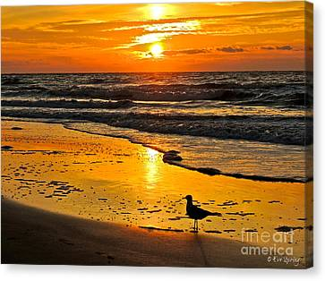 Taking It All In Canvas Print by Eve Spring